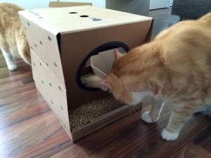 Das Einweg Katzenklo während des Aufbaus