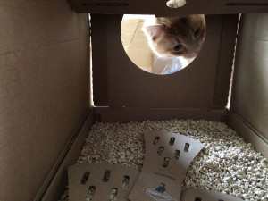 Das neue Poopy Cat Katzenklo