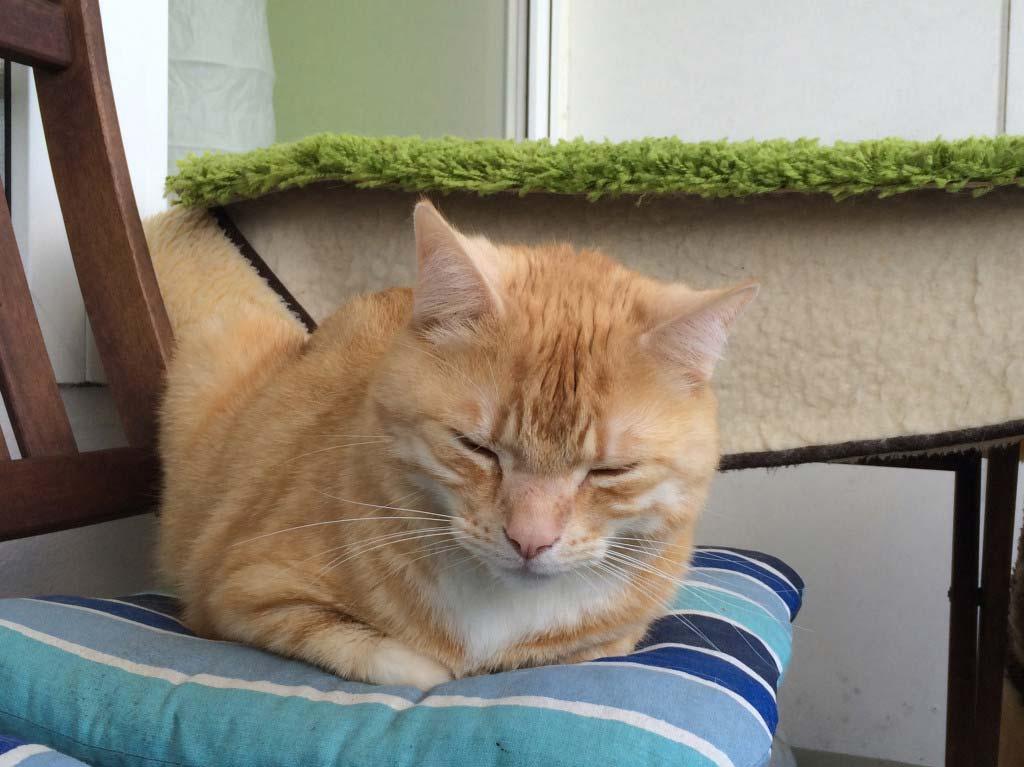 Flöhe bei Katzen sind anstrengend