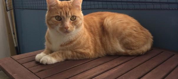 Katze kotzt ständig - Leo hat es überstanden