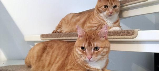 Zusammenleben mit Katzen mit schön