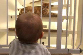 Unser Nachwuchs und Leo am Treppenschutzgitter von Trixie