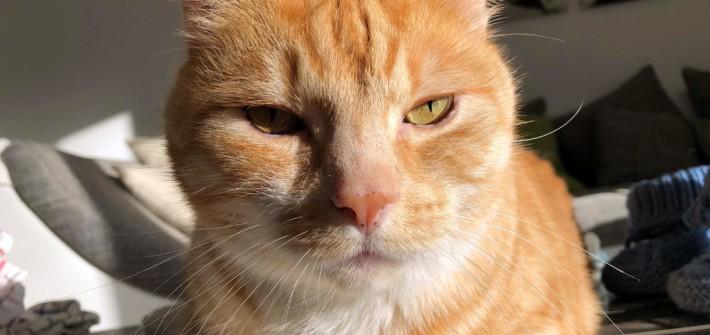 Baldrian & Katzenminze - Ein Vollrausch für Katzen?