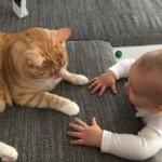 Beziehungsupdate: Wie entwickelt sich das Verhältnis unserer Katzen mit unserem Sohn?