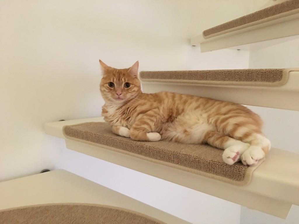 Clio liegt auf der Treppe