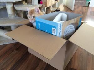 Clio und seine Kartons