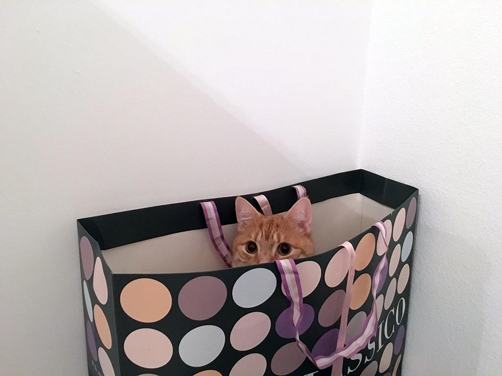 Clio versteckt sich in einer Tüte