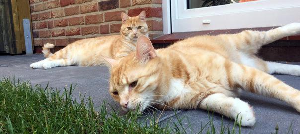 Unsere Kater entspannen im neuen Katzengehege
