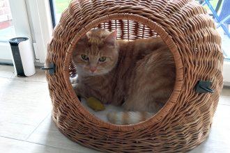Etwas Neues ist für Katzen: Abwechslung ist wichtig