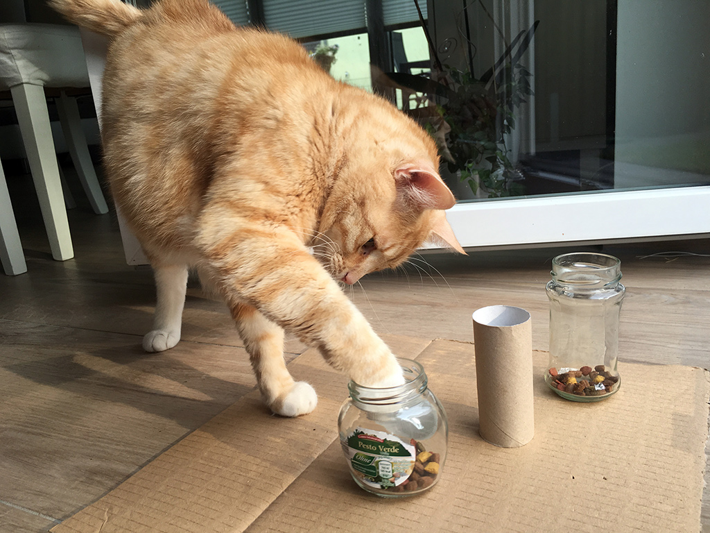 Katzenspiele Für Katzen