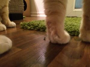 Unsere Katze frisst Fliegen - Leo auf der Jagd