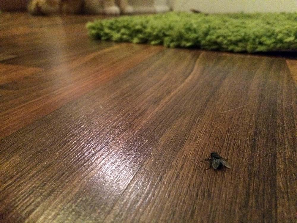 meine katze frisst fliegen gef hrlich oder gesund. Black Bedroom Furniture Sets. Home Design Ideas