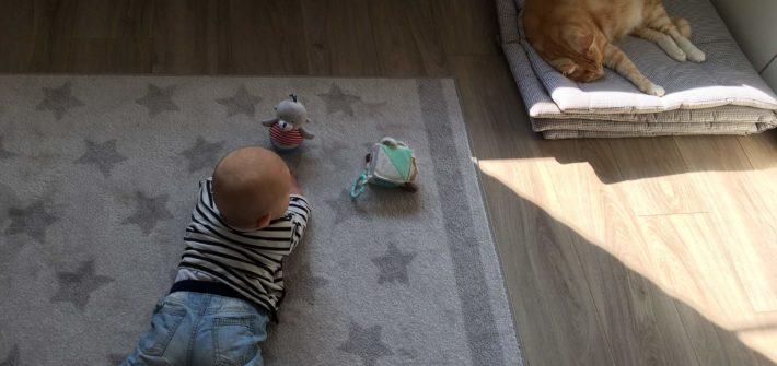 Katzen und Babys - Der erste Kontakt