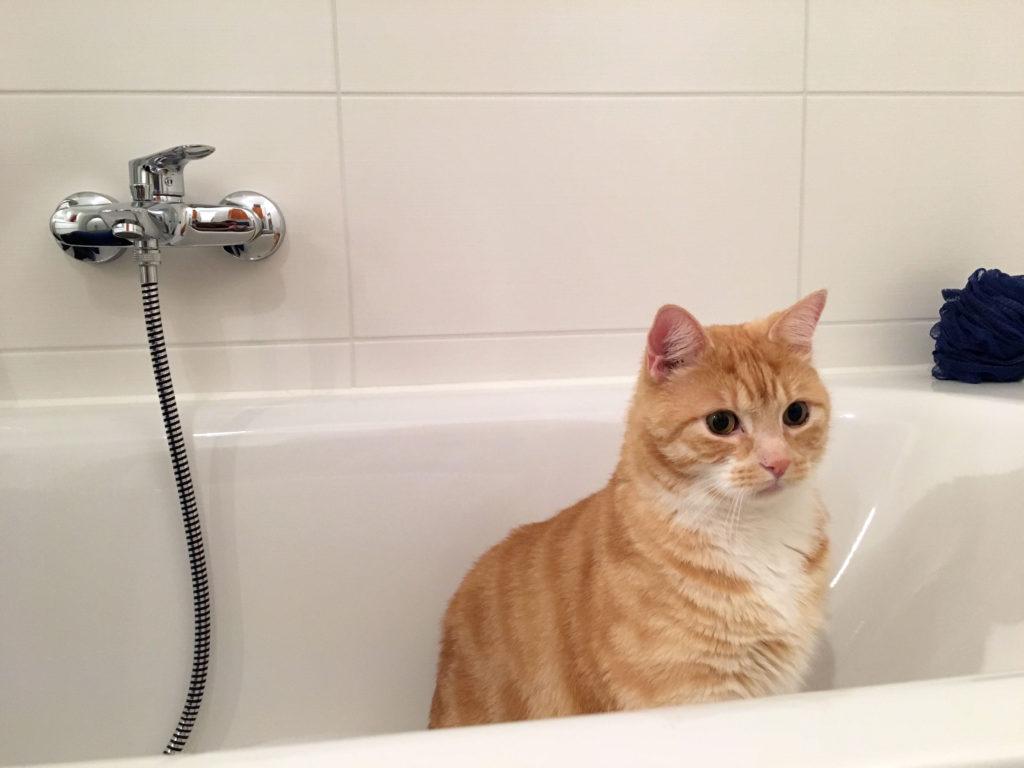 Was Du beim Katzen baden beachten und berücksichtigen solltest