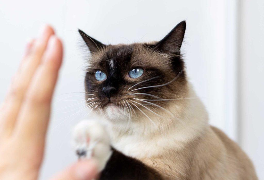 Katzen Clickertraining