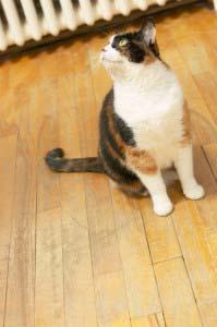 Katzen in Mietwohnungen Auszüge aus dem Mietrecht
