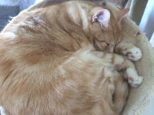 Katzen schlafen - Leo in der Liegemulde
