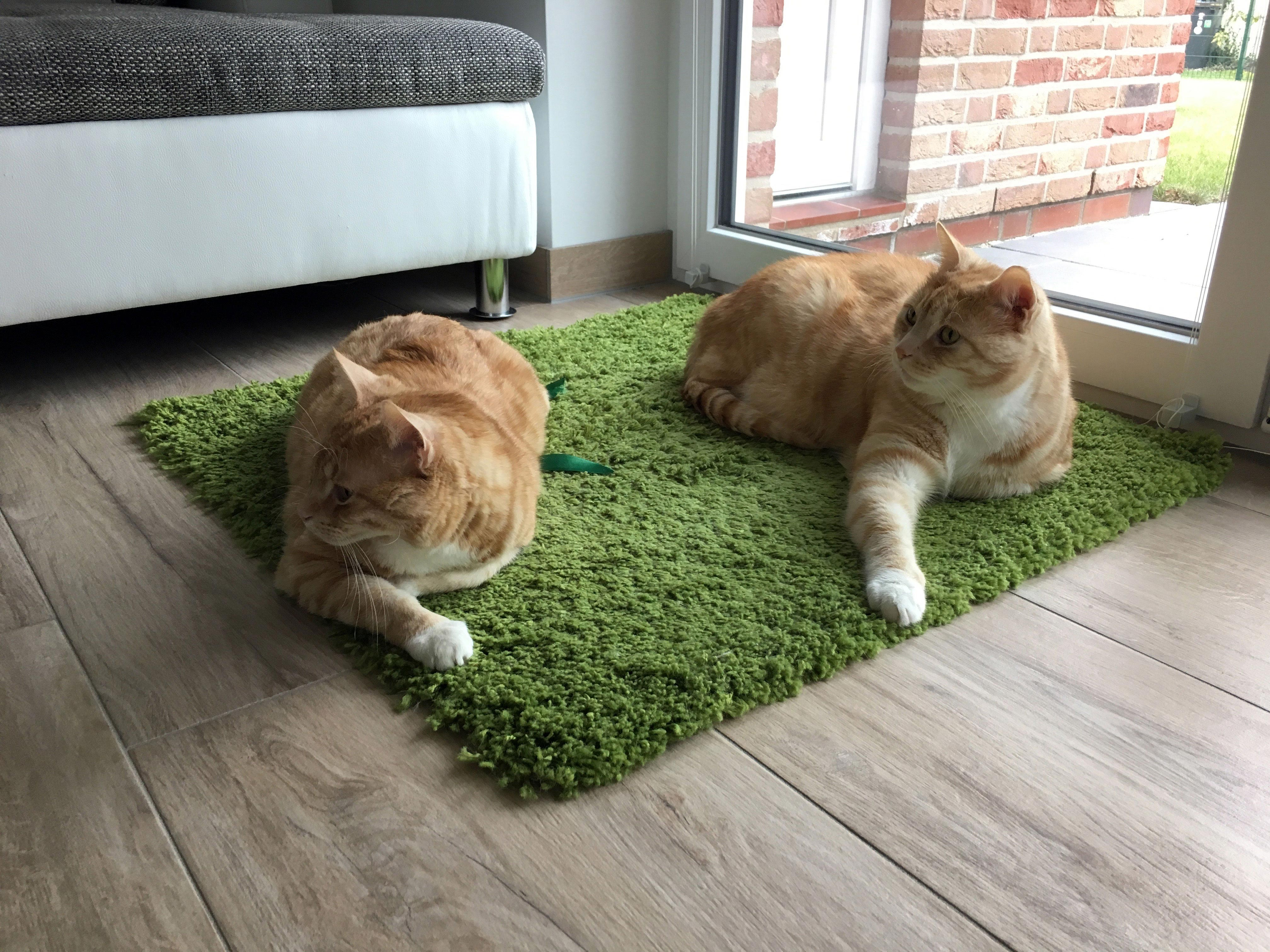 Katzen in der Schwangerschaft