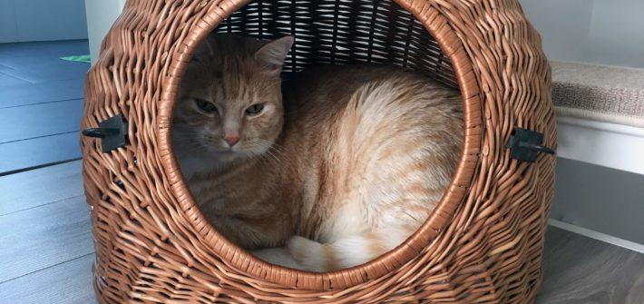 Katzen Transportbox kaufen