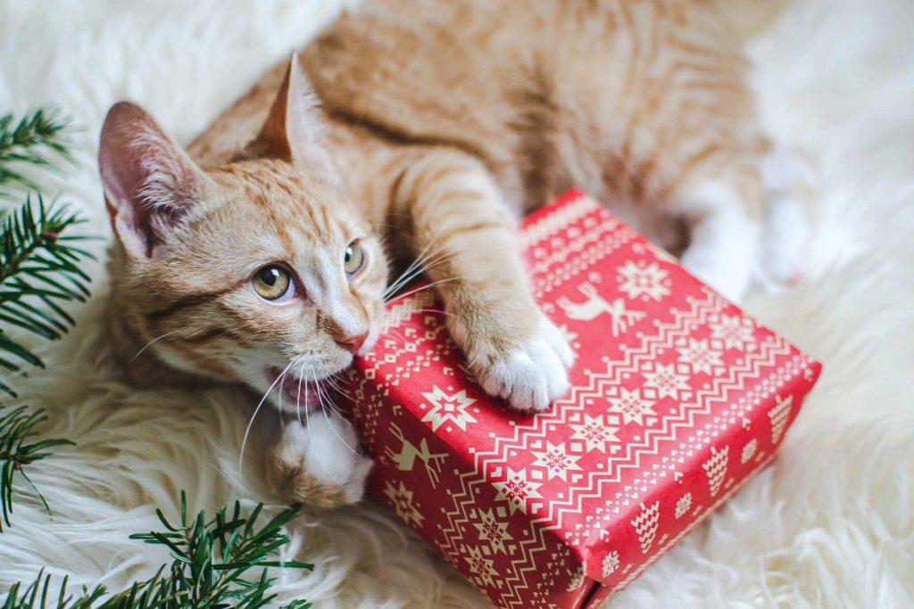 Weihnachten mit Katzen feiern