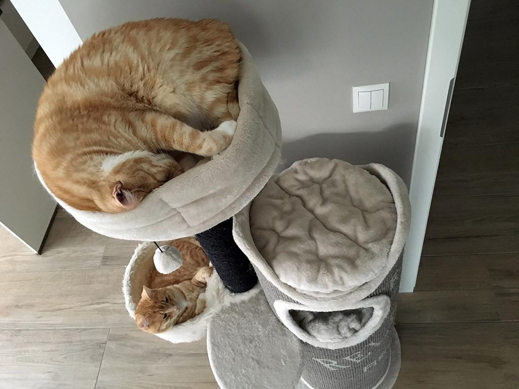 Ganz normal: Auch Katzen zucken im Schlaf