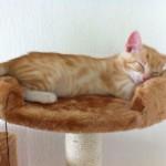 wann ist krallen schneiden bei katzen wirklich notwendig. Black Bedroom Furniture Sets. Home Design Ideas