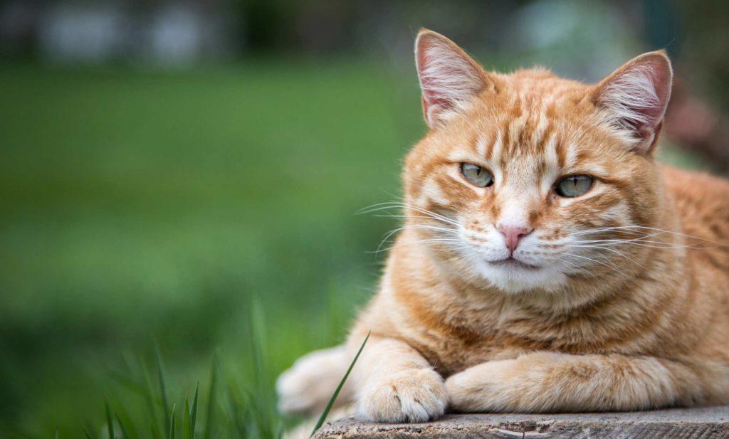Sind Katzenhaare ein Grund gegen eine Katze?