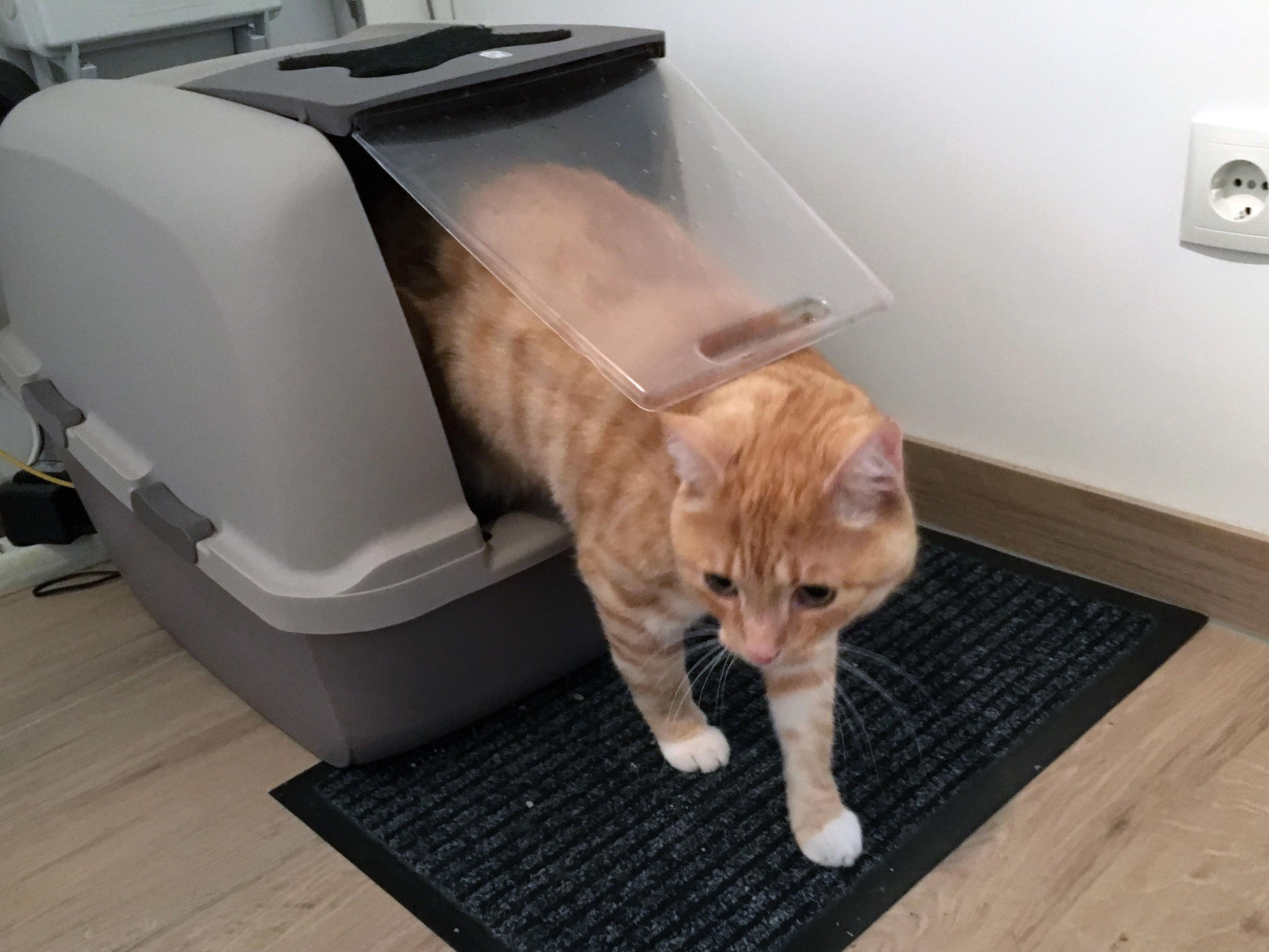 Katzenklo - 5 Tipps rund um die Katzentoilette