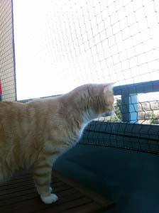 Katzennetz und Wohnungskatze Leo