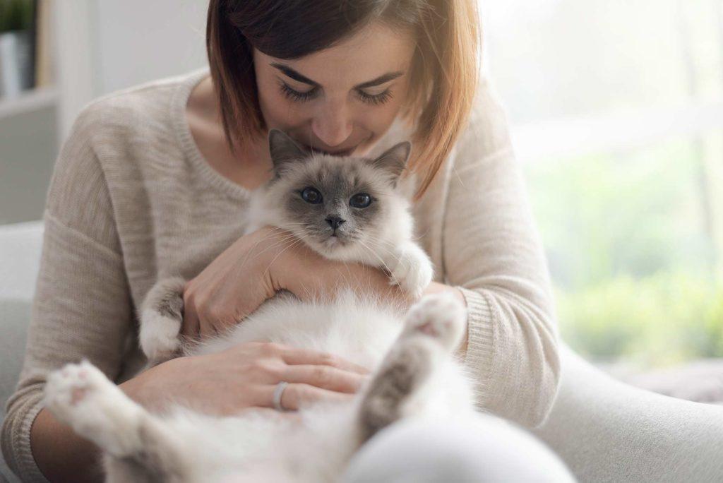 Katzenrassen: Heilige Birma Katze