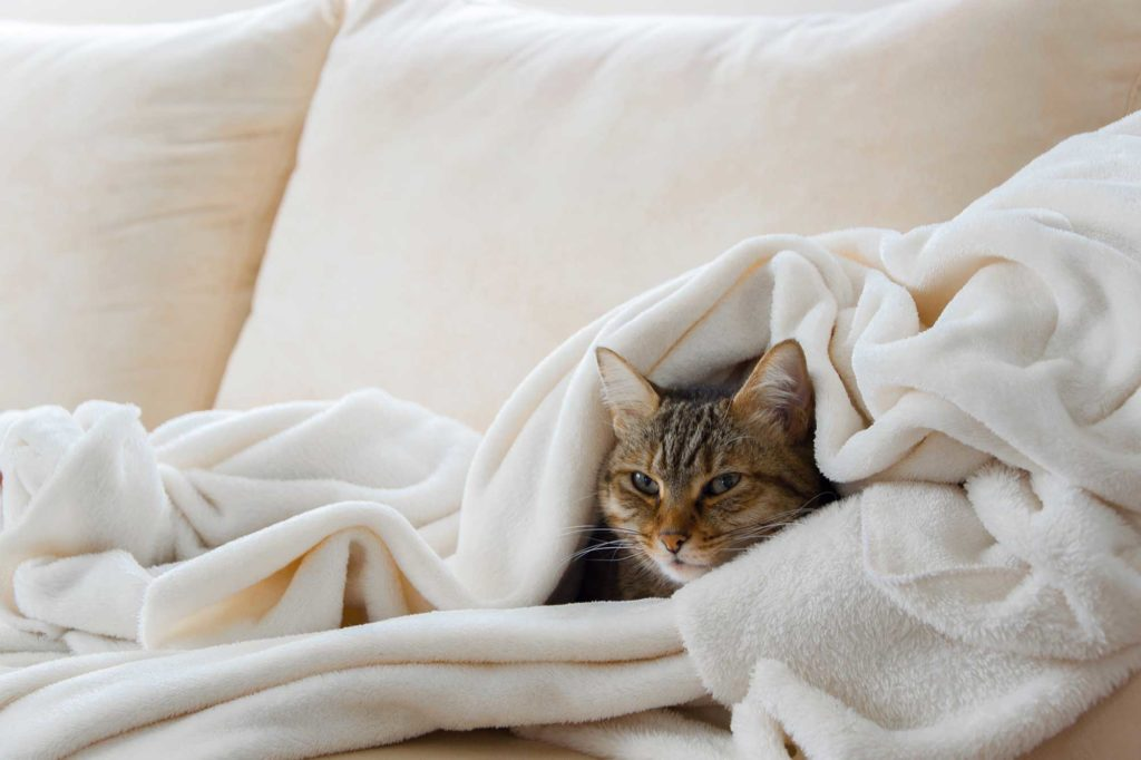 Katzenschnupfen - Was tun?