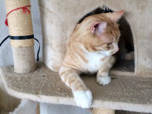 Katzensitter gesucht: Wie ihr den richtigen Betreuer für Eure Katze findet