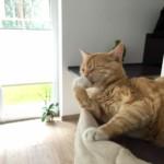 Katzenzunge - Was macht sie so besonders?