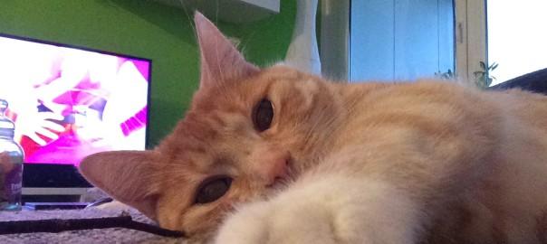 Krallen schneiden bei Katzen wirklich notwendig?
