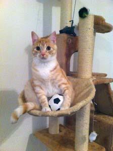 Kratzbaum - Leo und der Fussball