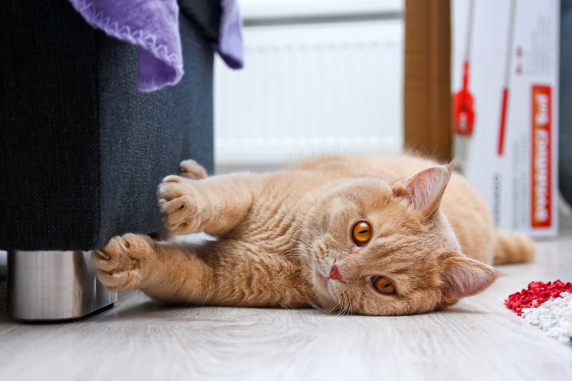 Kratzbrett für Katzen