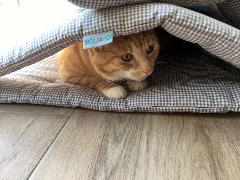 Leo versteckt sich gerne unter der Babydecke