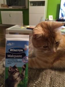 Malzpaste für Katzen hilft Haarballen zu verdauen
