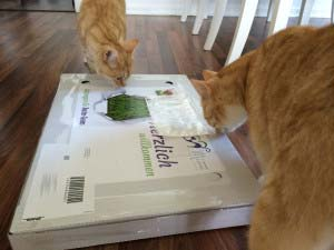 MIAU Katzengras im Karton