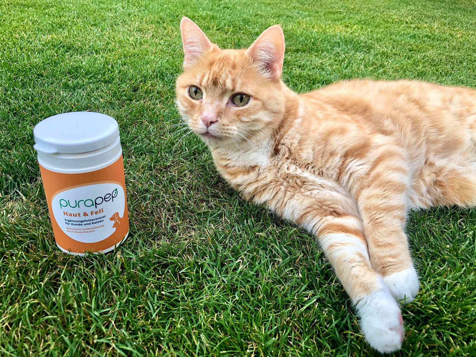 Purapep - Nahrungsergänzung für Katzen: Unsere Erfahrungen