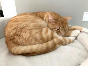 Rote Katzen - Was macht sie so besonders?