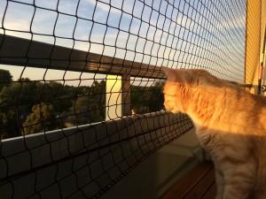 Sommer: Eine schwierige Jahreszeit für Katzen