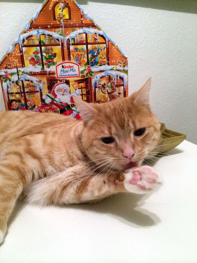 weihnachten mit katzen welche regeln du beachten solltest. Black Bedroom Furniture Sets. Home Design Ideas