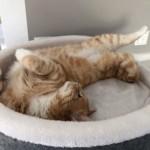 Wie alt werden Katzen? Katzenjahre in Menschenjahre umrechnen