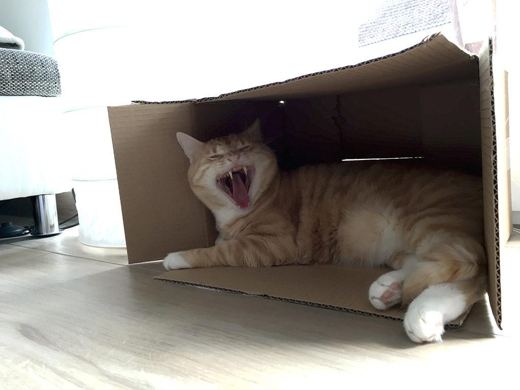 Zahnstein bei Katzen: Was Du tun kannst
